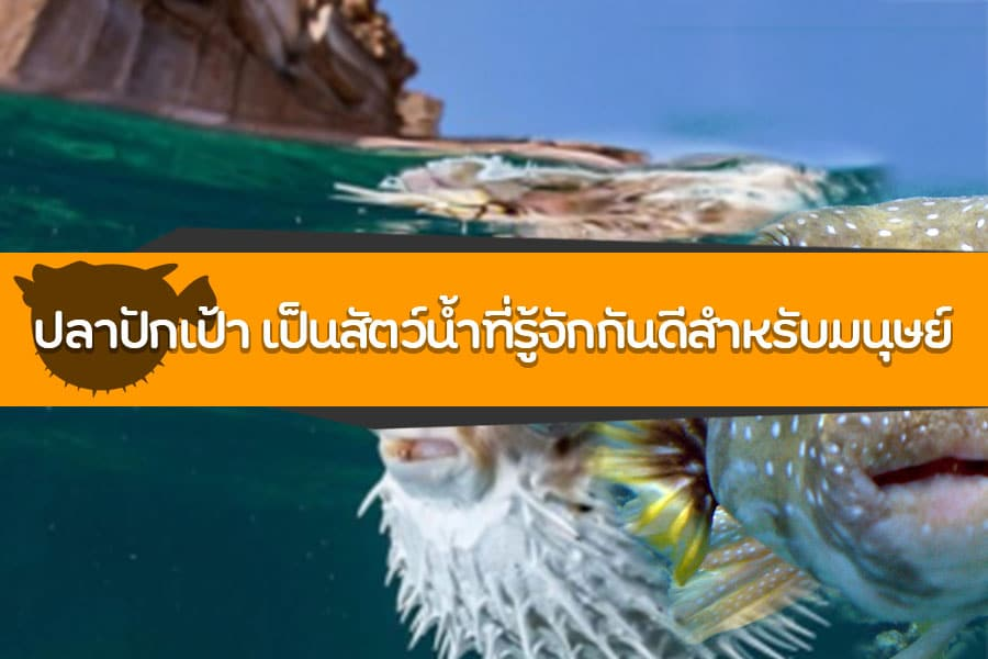 ปลาปักเป้า